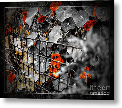 Life Behind The Wire Metal Print
