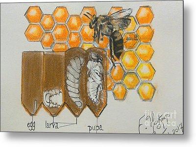 Life Cycle Of A Bee  Metal Print