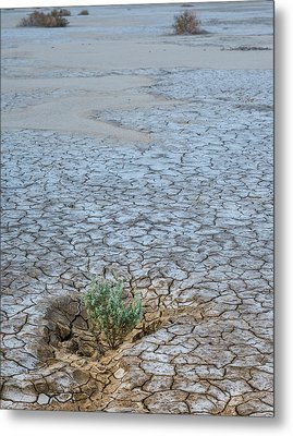 Life In A Dry Place Metal Print