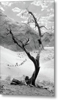 Life In The Desert -  Arizona Metal Print by Mike McGlothlen