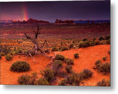 Light Of The Desert Metal Print