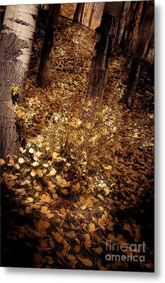 Metal Print featuring the photograph Lighting The Way by The Forests Edge Photography - Diane Sandoval