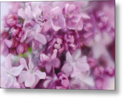 Metal Print featuring the photograph Lilac - Lavender by Diane Alexander