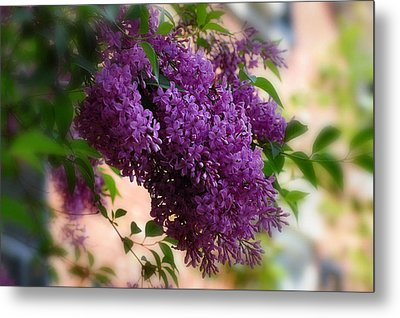 Metal Print featuring the photograph Lilacs by Elaine Manley