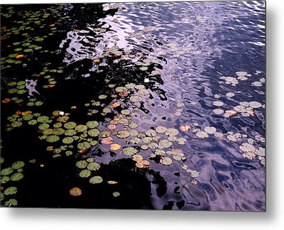 Metal Print featuring the photograph Lilies In The Water by Lyle Crump