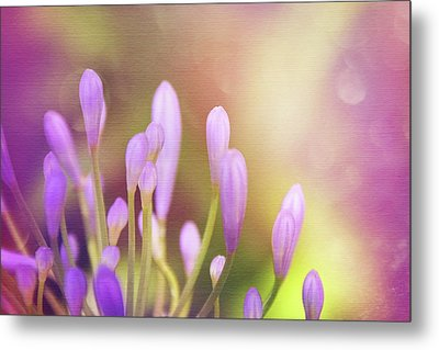 Lily Of The Nile Buds In Summer  Metal Print