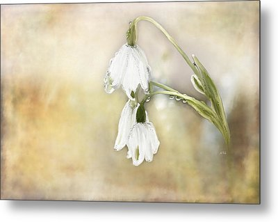 Lily Of The Valley Metal Print by Angela A Stanton
