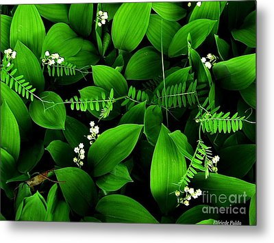 Lily Of The Valley Metal Print by Elfriede Fulda