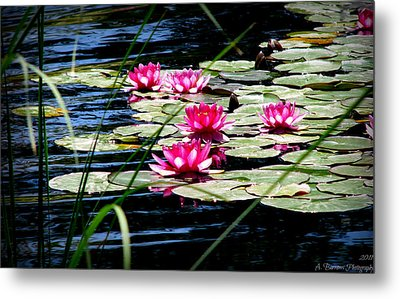 Lily Pads And Wildflowers Metal Print