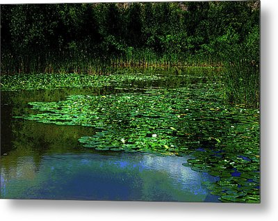 Lily Pond Metal Print by Elaine Manley