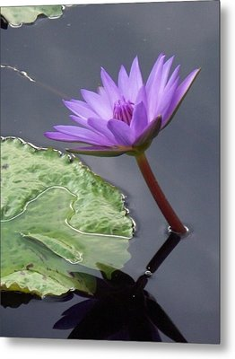 Lily Pond Metal Print by Eric  Schiabor