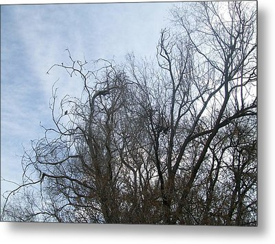Metal Print featuring the photograph Limbs In Air by Jewel Hengen