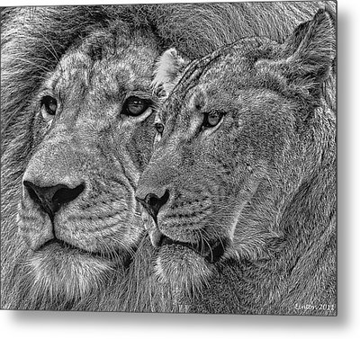 Lion King And Queen Metal Print