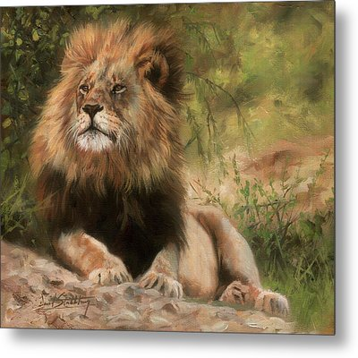Metal Print featuring the painting Lion Resting by David Stribbling