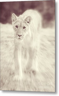 Lion Spirit Animal Metal Print