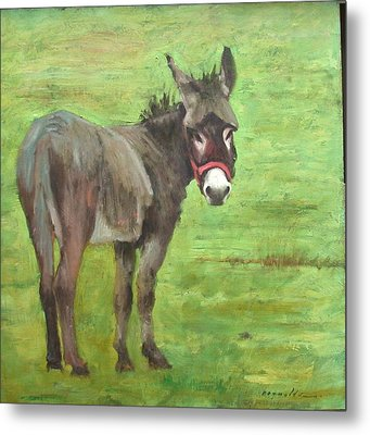 Little Burro Metal Print by John Reynolds