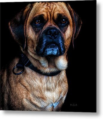 Little Dog Big Heart Metal Print by Bob Orsillo