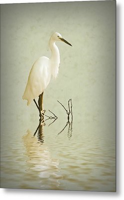 Little Egret Metal Print by Sharon Lisa Clarke