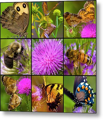 Little Guys  Metal Print by Betsy Knapp