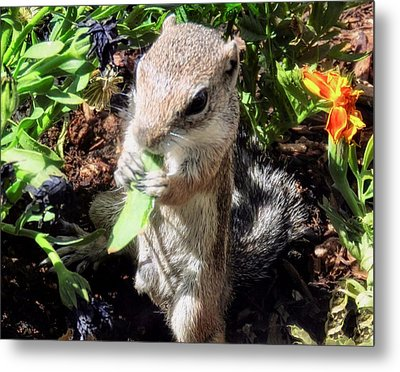 Little Nibbler Metal Print