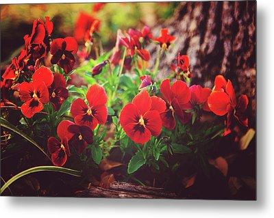 Little Red Pansies Metal Print by Toni Hopper