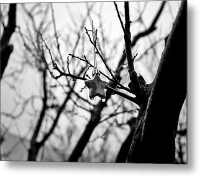 Metal Print featuring the photograph Little Star by Lennie Green