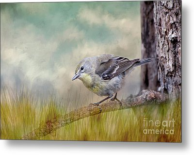 Metal Print featuring the photograph Little Warbler In Louisiana Winter by Bonnie Barry