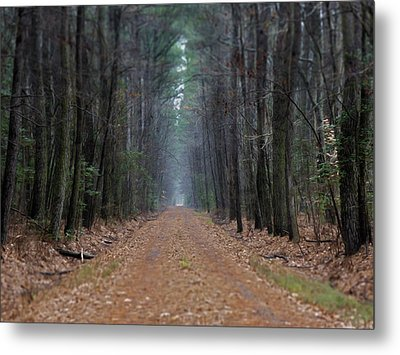 Metal Print featuring the photograph Loblolly Lane by Robert Geary