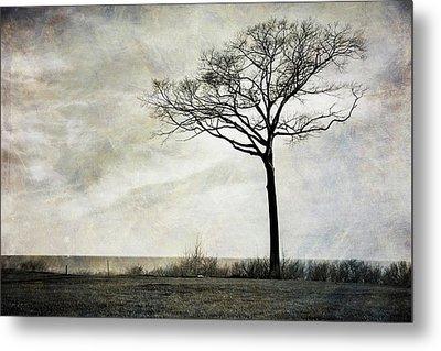 Lone Tree By The Lake Metal Print