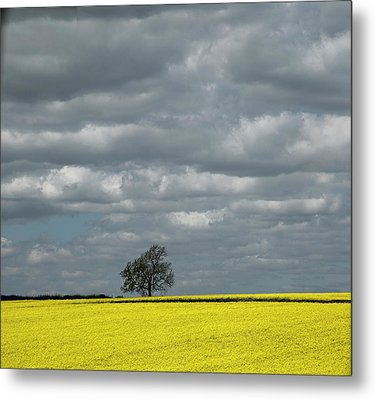 Metal Print featuring the photograph Lone Tree by Elvira Butler