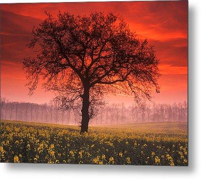Lone Tree Sunrise Metal Print by John Perriment
