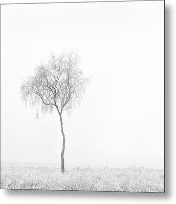 Lonely Birch Tree Metal Print
