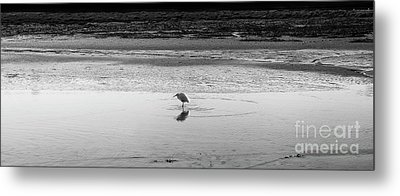 Metal Print featuring the photograph Lonely Heron by Nicholas Burningham