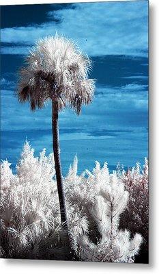 Lonesome Palm Metal Print by Bob Pomeroy