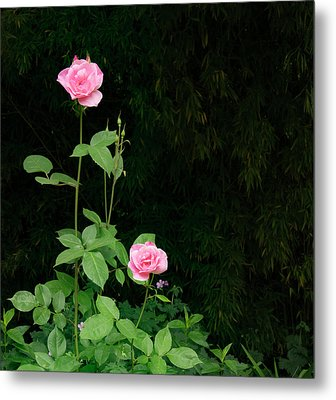 Metal Print featuring the photograph Long Stemmed Rose by Jean Noren