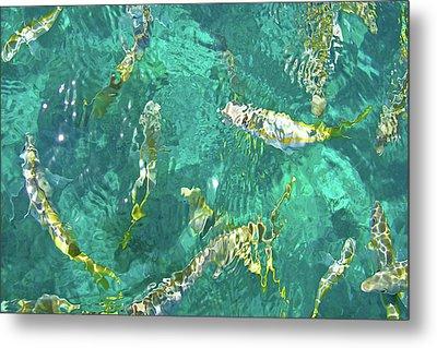 Looe Key Reef Metal Print by Charles Harden