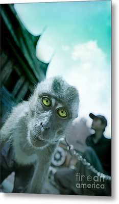 Look Into My Eyes Metal Print by Charuhas Images