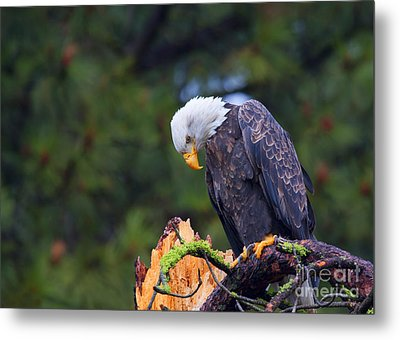 Looking Down On The World Metal Print by Mike  Dawson