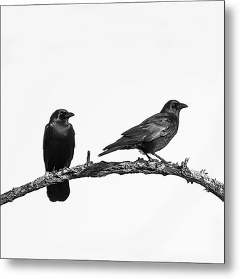 Looking Right Two Black Crows On White Square Metal Print