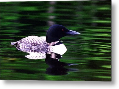 Loon On The Lake Metal Print by Rick Frost