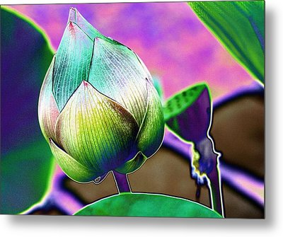 Lotus Dreaming 8 Metal Print
