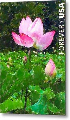 Lotus Flower At Kenilworth Garden Metal Print by Lanjee Chee