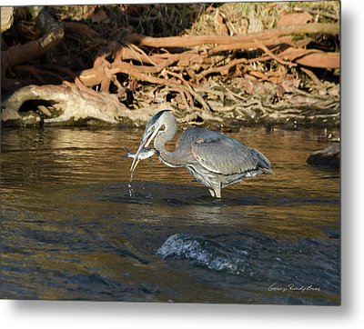 Lunch On The Neuse River Metal Print by George Randy Bass