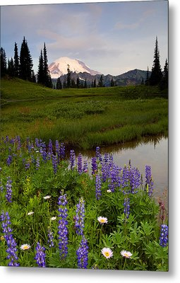 Lupine Sunrise Metal Print by Mike  Dawson