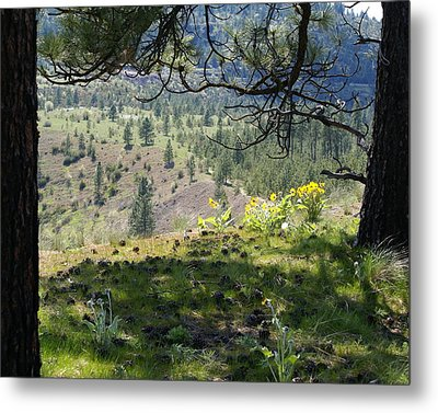 Metal Print featuring the photograph Made In The Shade by Ben Upham III