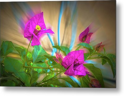 Magenta Magic Metal Print by Mark Dunton