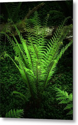 Magic Fern Metal Print by Svetlana Sewell