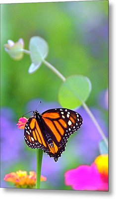 Metal Print featuring the photograph Magical Monarch by Byron Varvarigos
