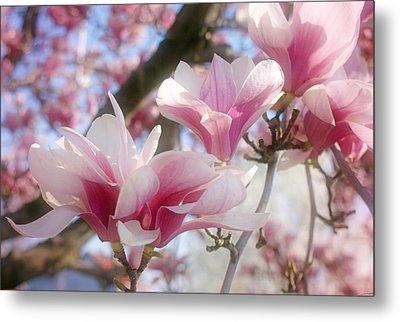 Magnolia Blossoms Metal Print by Sandy Keeton