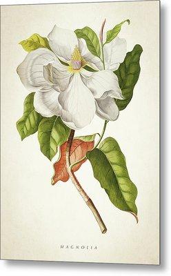 Magnolia Botanical Print Metal Print by Aged Pixel